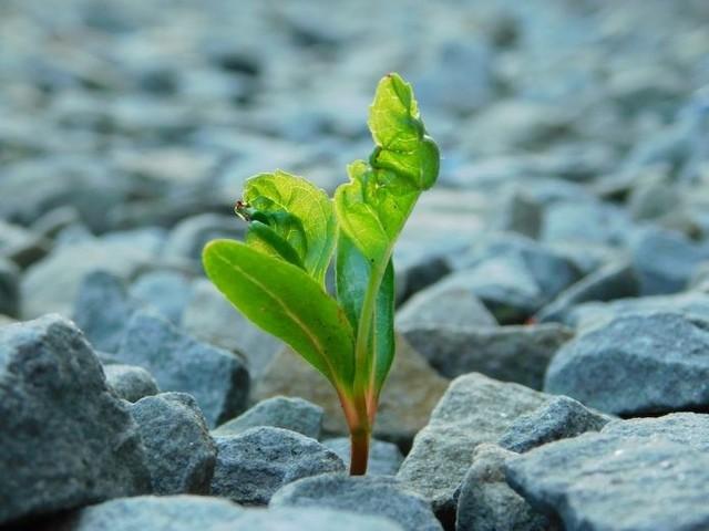 Si face à l'adversité vous faites de votre mieux, vous réussissez